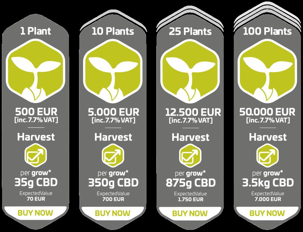 cannabis investment, cannabis pflanzen investment, cannerald, cannerald gmbh, cannerald schweiz, cannergrow mazedonien, cannerald test, cannerald token, cannergrow, cannergrow affiliate, cannergrow cannabis, cannergrow erfahrungen, cannergrow kritik, cannergrow partner programm, cannergrow serioes, cannergrow seriös, cannergrow test, cannermed, cannerrec, levin amweg, stefan amweg, Fabian eder, cannergrow login, cannergrow schweiz, cannergrow deutsch, cannergrow erfahrung, cannergrow ico, cannergrow reddit, cannergrow review, cannergrow scam, cannergrow token, cannerald token sale, cannerald bern, cannerald erfahrungen, cannerald llc, cannerald login, cannerald review, levin amweg cannerald, drogen dealer werden, cannergrow mlm, cannergrow network marketing, cannergrow multi level marketing, cannergrow registrieren, cannergrow anmelden, cannergrow investieren
