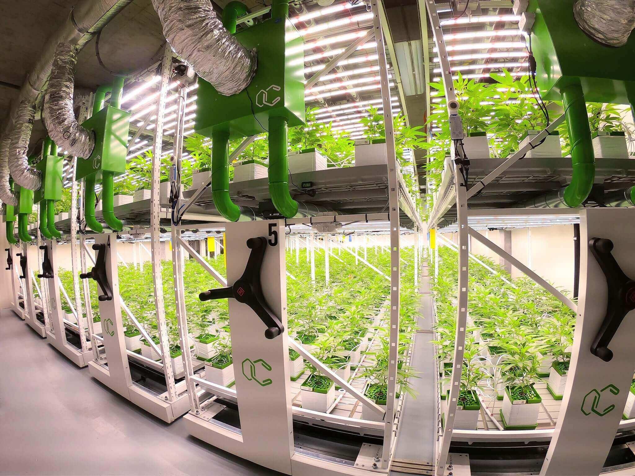 cannabis pflanzen investment, cannerald, cannerald gmbh, cannerald schweiz, cannerald test